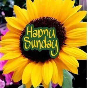 Happy Sunday  🌻 ☀️